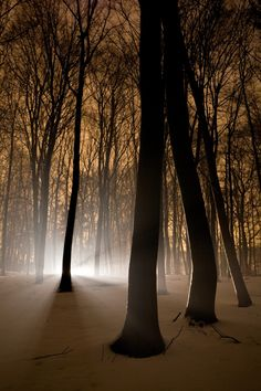 Winter scenic at night with light through trees and mist