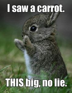 I saw a carrot.  It was this BIG, no lie!  Cute bunny!