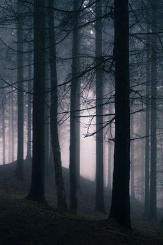 banshy: The Forest   Karin Ziegler