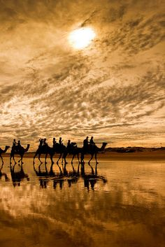 Camel ride in the Sahara Desert