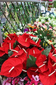 follaje, flores artificiales Plants