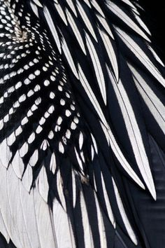 Fine Feathers | Exercice de Style