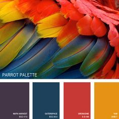11 Beautiful Color Palettes Inspired By Nature — Parrot Palette (all paint is Behr) [Yam is a nice autumn color (and Napa Harvest would be a good accent to it). Outerspace might have possibilities.] - Decoration for House Colour Schemes, Color Combos, Color Patterns, Colour Palettes, Best Color Combinations, Nature Color Palette, Palette Design, Decoration Palette, Color Palate
