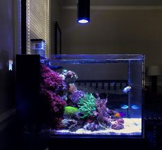 IM 14 Peninsula Reef - New Beginnings : ReefTank Gracilaria Hayi-red macro algae