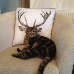 Was that cushion DEER ? Or reasonably priced ? If I ripped it with my sharp claws, would you say that was a CATastrophe ?