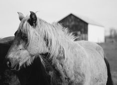 Horses, Photography, Animals, Animales, Animaux, Horse, Photograph, Fotografie, Words