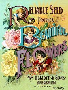 Wm. Elliott & Sons seed catalogue