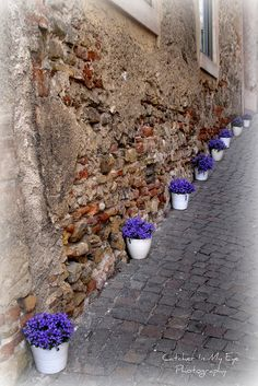 Spring is just over the hill :)  Asolo Italy