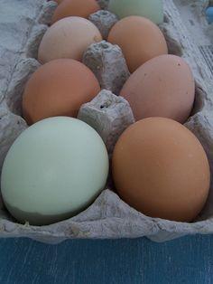 Freezing eggs....yep ya can!