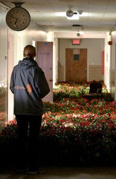 수천 송이 꽃으로 꾸며진 어느 정신병원.    Thousands Of Flowers Planted In Abandoned Mental Asylum, by Anna Schuleit