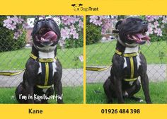 Kane here from Dogs Trust Kenilworth loves going for long walks and playing with toys. Dogs Trust, Animal Rights, Walks, Shelter, Adoption, Cute Animals, Pets, Doggies, Homes