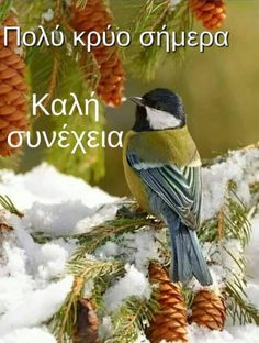 All Pictures, Beautiful Birds, Good Day, Animales, Bebe, Buen Dia, Good Morning, Hapy Day