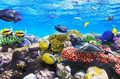 Corals and Fish, Red Sea, Egypt jigsaw puzzle in Under the Sea puzzles on TheJigsawPuzzles.com