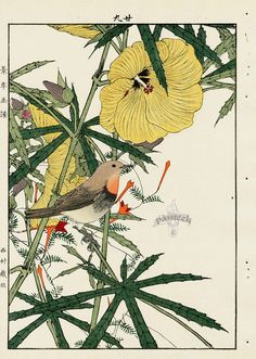 Hibiscus, Japanese Robin Redbreast from Imao Keinen Kacho original Japanese woodblock prints of birds and flowers Japanese Prints, Japanese Art, Nature Prints, Art Prints, Japanese Woodcut, Art Chinois, Nature Drawing, Botanical Drawings, Japanese Painting