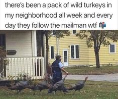A Collection of The Funniest Memes on the Internet Right Now - We Should Be Working Animal Memes, Funny Animals, Funny Memes, Hilarious, Funniest Memes, Dump A Day, Great Memes, Morning Humor, Best Funny Pictures