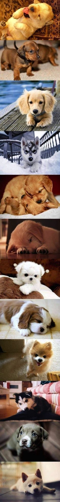♥ puppies warm the heart