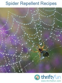 This page contains recipes for spider repellent. Many people are scared of spiders, or simply don't want them in or near their house. If you are one of these people, then you need a spider repellent.