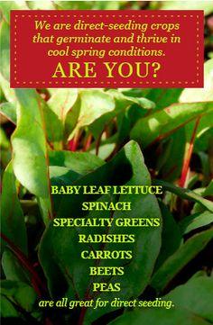 #springplanting High Mowing Organic Seeds - 100% Organic, Non-GMO Seeds