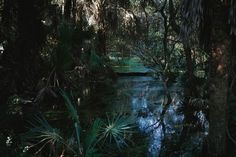 Garden Travel By Boat: Next Stop, Boneyard Beach~  The swampy mid-section of the island. Or, as we like to call it: gator territory.