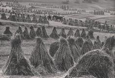 Martin Martinček - Svitanie na poli Pierre Auguste Renoir, Eastern Europe, World History, Historical Photos, Romania, Old Photos, Countryside, Fields, Black And White
