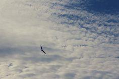 ¿No sería maravilloso ver el mundo desde ahí arriba?