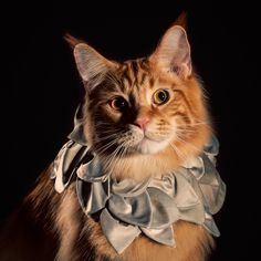 Елизаветинской Кошка Ошейники - Рекламные Кампании