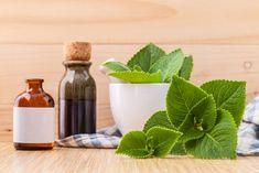Léčivé kubánské oregano. Tuto rostlinu pěstujete doma i vy, jen ji znáte pod výmluvnějším názvem - OnlyU Natural Skin Moisturizer, Natural Skin Care, Borage Oil Benefits, Essential Oils For Eczema, Diabetes, How To Treat Eczema, Oregano Oil, Dieta Detox, Natural Health Remedies