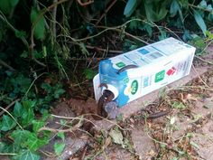 Build a poison-free slug trap by first mixing one liter of water 25 g of malt extract and 30 ml of alcohol. The angered Slug Trap, Garden Plants, Tricks, Gardening Tips, Outdoor Gardens, Garden Design, Diy And Crafts, Life Hacks, Projects To Try