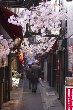 Cherry blossom alley in Shinjuku, Tokyo