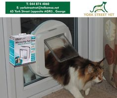 Give your pets the freedom they deserve and keep unwanted guests out with this revolutionary Microchip Pet Door. York Street Vet Shop and Consulting Rooms has these in stock or will order for your specific size animal. Visit us today. #security #ilovemypet #vetshop