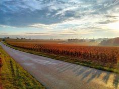 Herbststimmung auf den Bio-Weinbergen von Domaine Chapelle, Burgund.  Alle BioWeine von Chapelle finden Sie hier: http://www.bioweinreich.com/shop/BioWeine/Nach_Weingut/Domaine_Chapelle