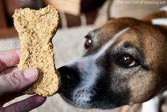 Our dog Grace absolutely loves meal time and is especially fond of homemade dog treats. I surprised her this weekend with a batch of these apple cinnamon Dog Biscuit Recipes, Dog Treat Recipes, Dog Food Recipes, Apple Cinnamon Oatmeal, Cinnamon Apples, Homemade Applesauce, Homemade Dog Treats, Doggie Treats, Dog Biscuits
