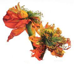 victoria braithwaite botanical artist - Google Search