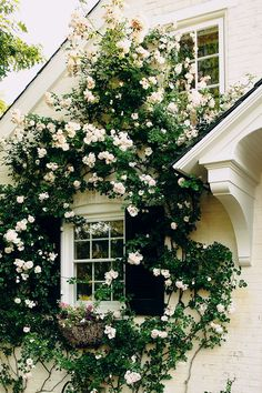 Gorgeous cottage covered in climbing white roses.