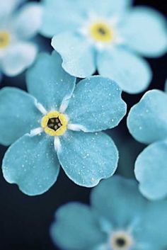 Delicate powder blue flowers #patterpod #beautifulcolor #inspiredbycolor