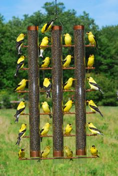 Wouldn't this be a cool fence panel? If could replicate in wood... Finch Feeder with 3 Tubes | Thistle Feeders | Gardener's Supply