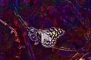 """New artwork for sale! - """" Blue Tiger Butterfly Butterfly  by PixBreak Art """" - http://ift.tt/2wa1pZq"""