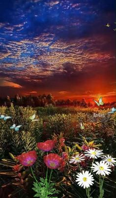 Beautiful Night Images, Beautiful Nature Pictures, Beautiful Nature Scenes, Beautiful Places, Beautiful Landscape Wallpaper, Beautiful Landscapes, Rose Flower Pictures, Butterfly Video, Neon Backgrounds