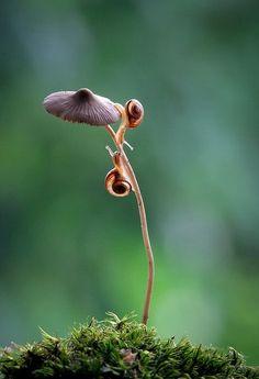 mushroom macro by user