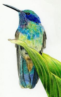 fabulous colors, looks to be colored pencil or watercolor pencils