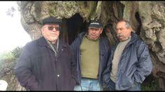 A aldeia de Mouriscas, em Abrantes, tem centenas de oliveiras milenares, entre elas a mais antiga registada em Portugal, com 3.350 anos, tendo despertado a atenção de um autarca luso-britânico, que quer levar um exemplar para Lambeth, Londres.