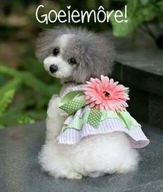 I'm not at all into dressing pets up, but this poodle is just so adorably bitsy Cute Puppies, Cute Dogs, Dogs And Puppies, Pet Fashion, Animal Fashion, Flower Fashion, Pet Shop Online, Baby Animals, Cute Animals