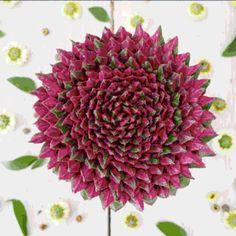 Glaubt es einfach: Das sind keine Blumen, sondern vegane Kuchen. Unglaublich, oder? Für mehr einfach klicken und auf helllaut.com beim Artikel landen.