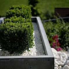 Blumentrog- Concreto Inspiring Things, How To Dry Basil, Concrete, Herbs, Outdoor, Design, Inspiration, Products, Timber Wood