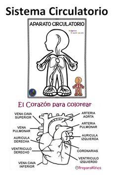 Science, Comics, Nature, School, Google, Ideas, Human Skeleton For Kids, Naturaleza, Cartoons