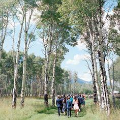 guests walking in woods