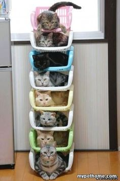 Cat storage for your new house! @Catrina Morbidelli