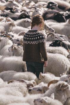 "iaminvincesible: "" Mass Sheep Herding """