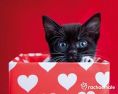 PetsLady's Pick: Adorable Valentine Kitten Of The Day...see more at PetsLady.com -The FUN site for Animal Lovers
