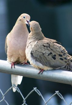 The deepest kind of Peace and Faith are represented by the dove. It is thought to quiet our troubled thoughts and renew our mind and spirit.~  Unknown